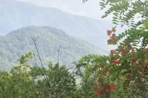 Scenery along Cherohala