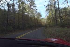 Marsh Creek Road's Turkeys