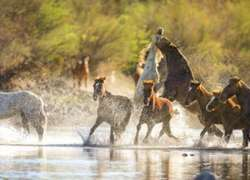 5th Annual Ride For The Salt River Wild Horses |  Arizona